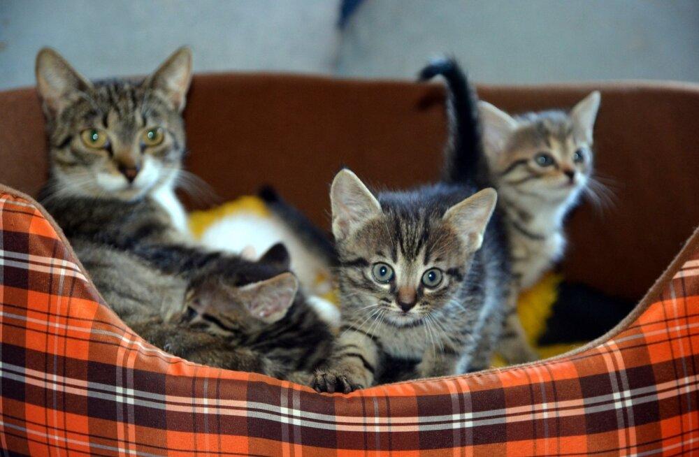 Kassiabiorganisatsioon Pesaleidja on tänulik: kasside abistamiseks koguti uskumatult suur summa
