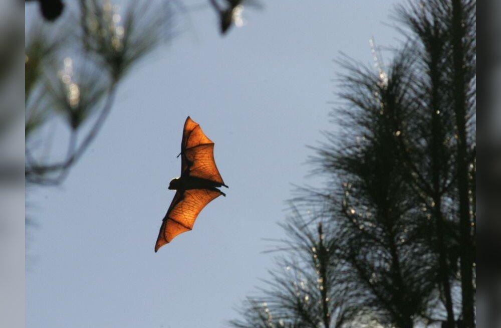 2008. aasta on rahvusvaheline nahkhiirte kaitse aasta
