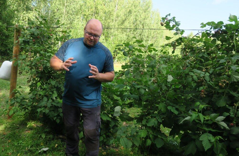 Tänavune parim taimekasvataja Raivo Sell kasvatab lisaks viljale ka vaarikaid.
