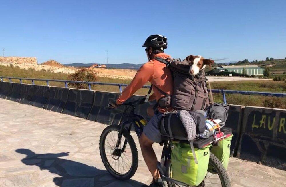 FOTOD ja VIDEOD | Paarike pakkus palverännakul nendega liitunud hulkuvale koerale kodu - edasi matkatakse koer seljakotis