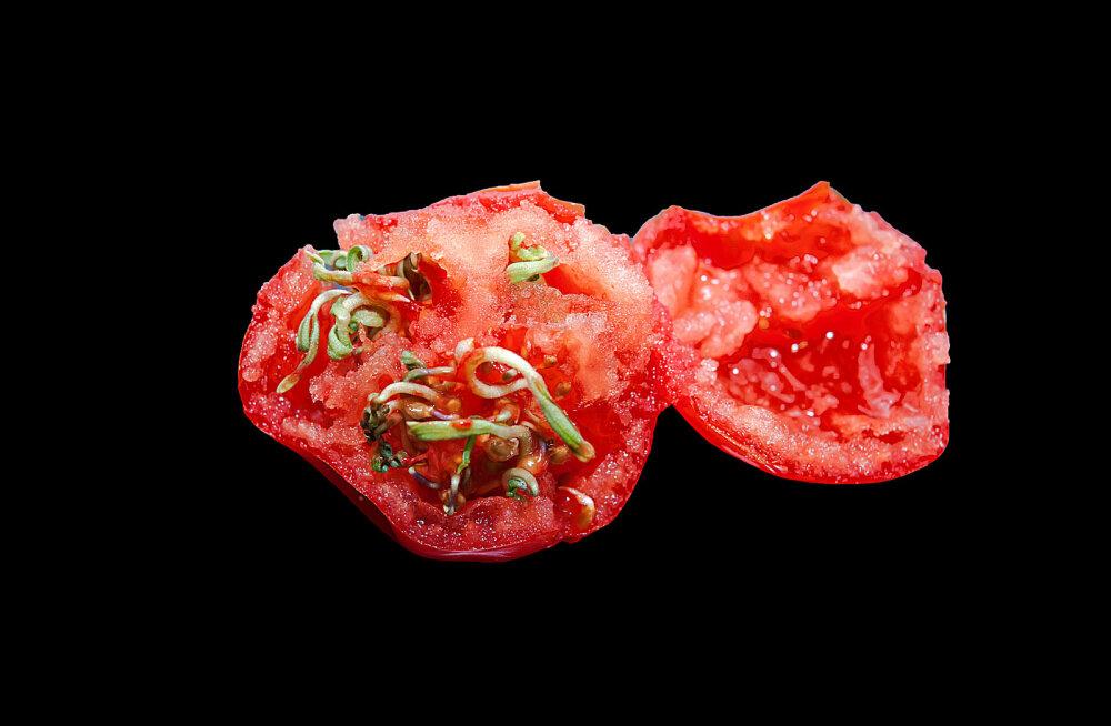 LUGEJAD MURETSEVAD | Tomati sees idanevad seemned! Miks?