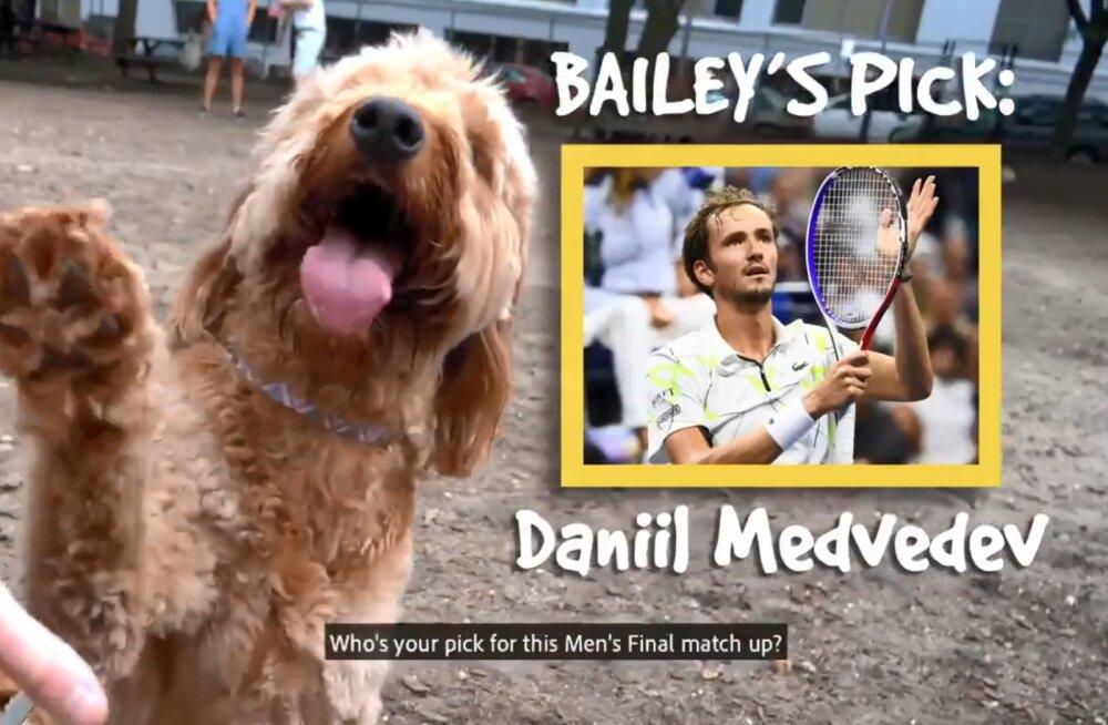 ВИДЕО: Собака-оракул предсказала победителя финала US Open