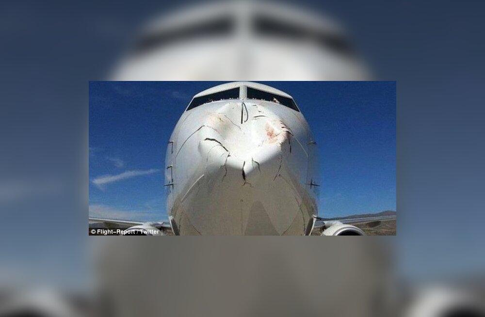 """USKUMATUD FOTOD: Turkish Airlinesi reisilennuk põrkas maandumisel linnuga kokku. """"See oli eesel, mitte lind!"""""""