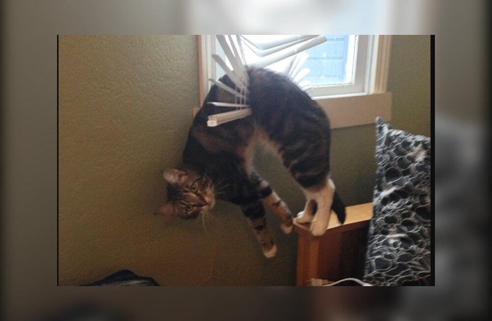 Meeleolukas GALERII | 20 kassi, kes pealtnäha viimase peal otsuseid viivitamatult kahetsema pidid