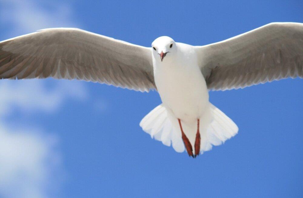 Необычный вызов: мужчина случайно вместо рыбы поймал чайку