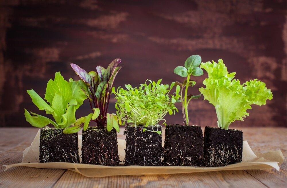 Tugevad taimed kasvavad kvaliteetses mullas.