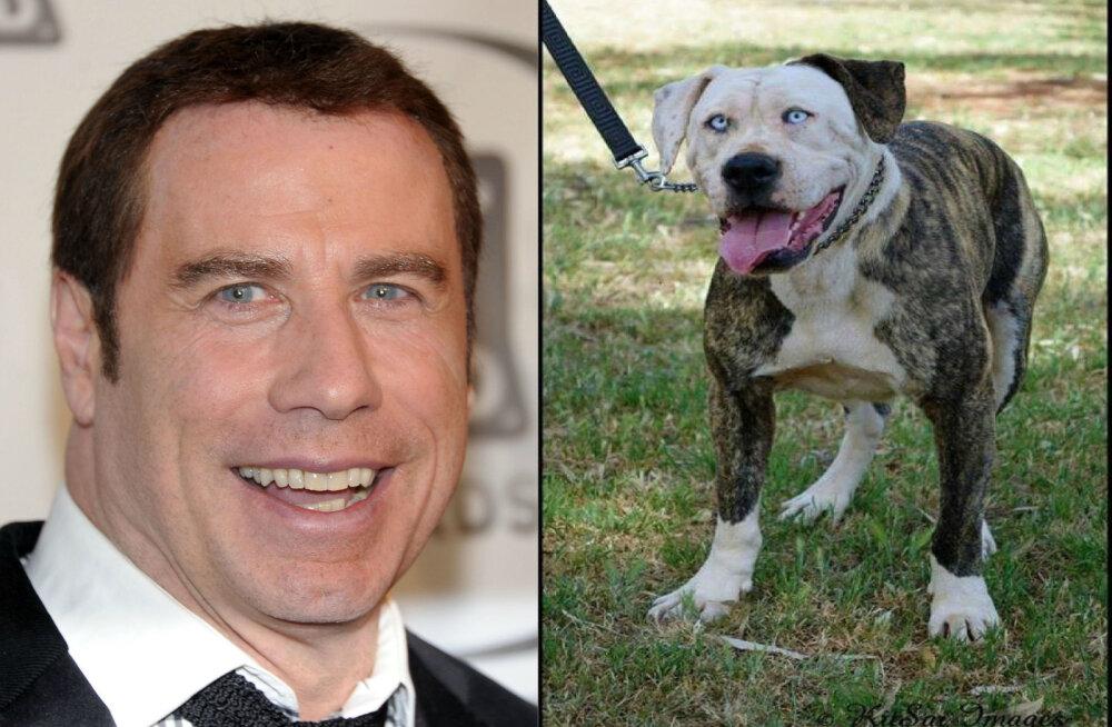 GALERII | Hämmastav sarnasus! Vaata ja naera, millised näevad välja tuntud filmitegelased ja nende loomadest teisikud!