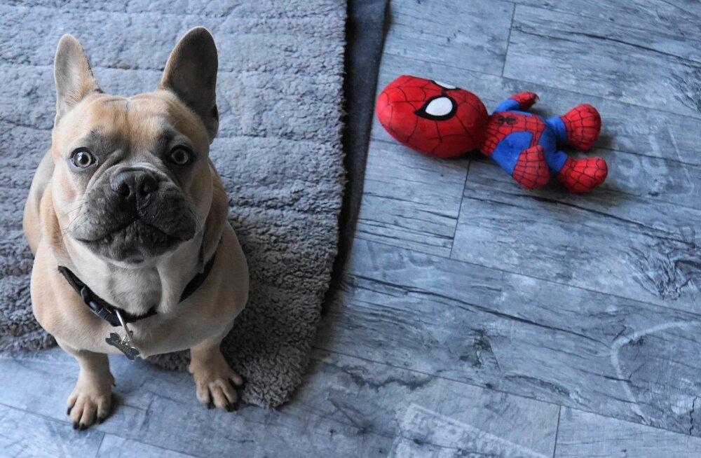 Miks koerad peremehele tervituseks mänguasju toovad?
