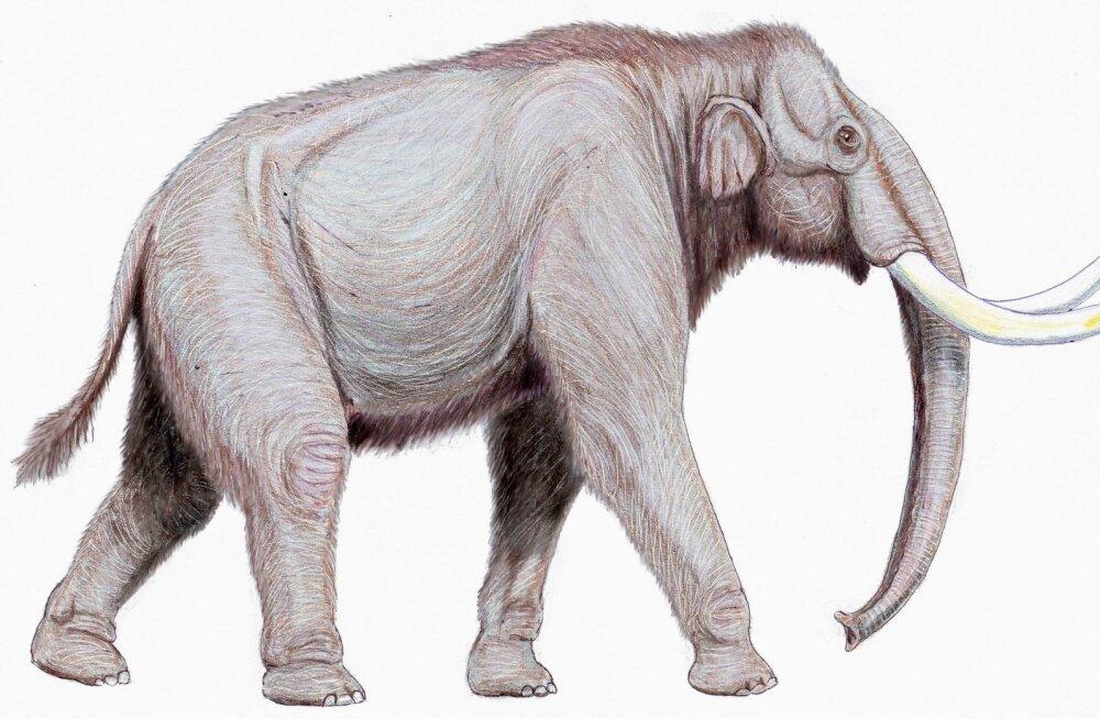 Uus teooria ühendab kaks levinud hüpoteesi, et miks mammutid välja surid