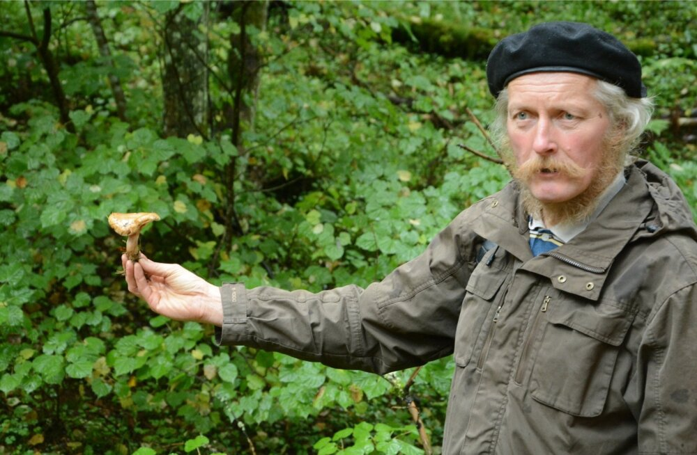 Tõnu Ploompuu sõnul on sel aastal seeneriigis kõik sassis. Koos on kevadsuvised seened ja sügiseseened. Praegu võib metsas näha tamme-kivipuravikku ja samal ajal on väljas ka heinikud, näiteks sügisene hobuheinik hakkab juba tulema