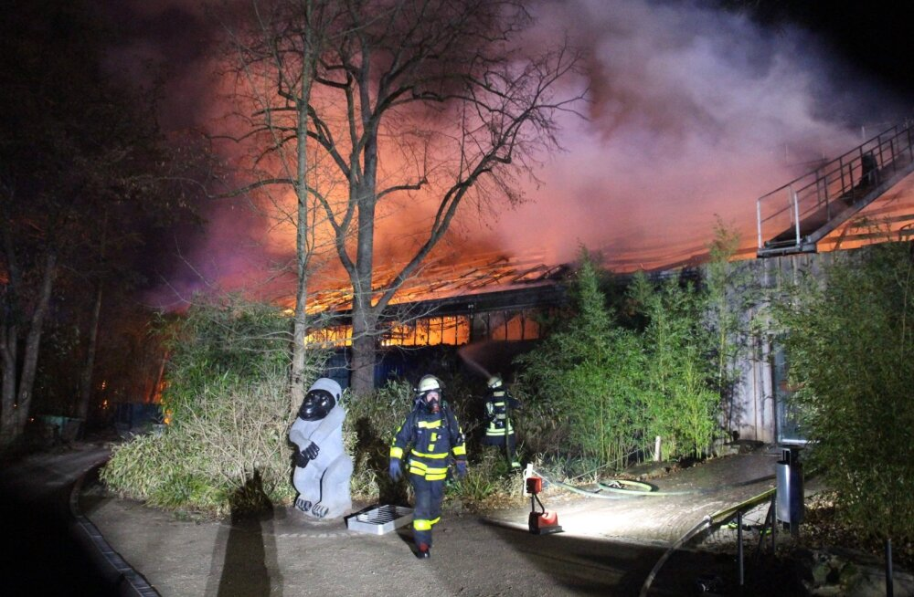 ВИДЕО | Трагедия в Германии. Пожар в зоопарке уничтожил вольер с обезьянами