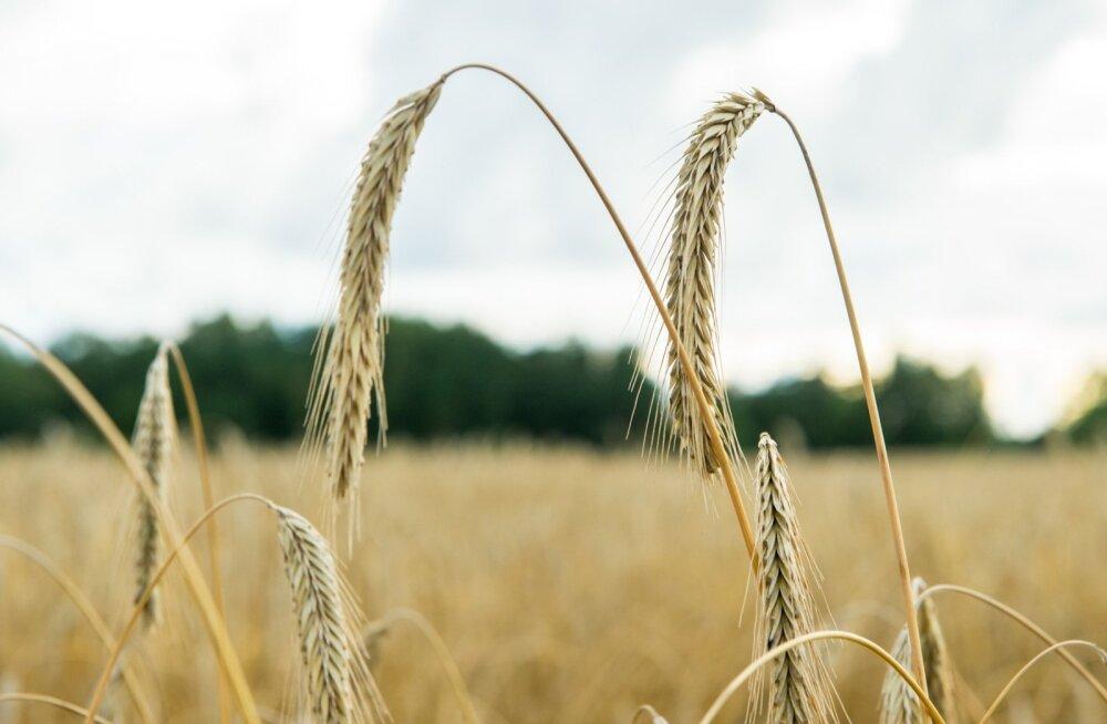 Maaeluministeerium: põllumajandustootmine on madalseisust üle saanud