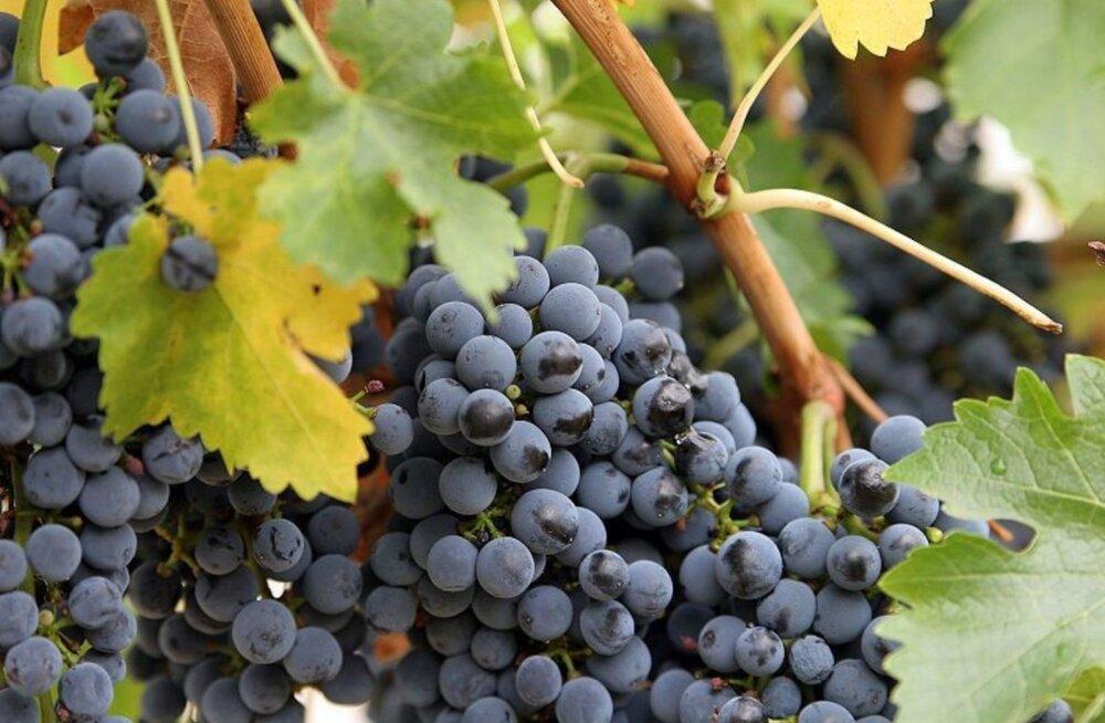 Punane vein vähendab stressi, kuid mitte selles sisalduva alkoholi tõttu