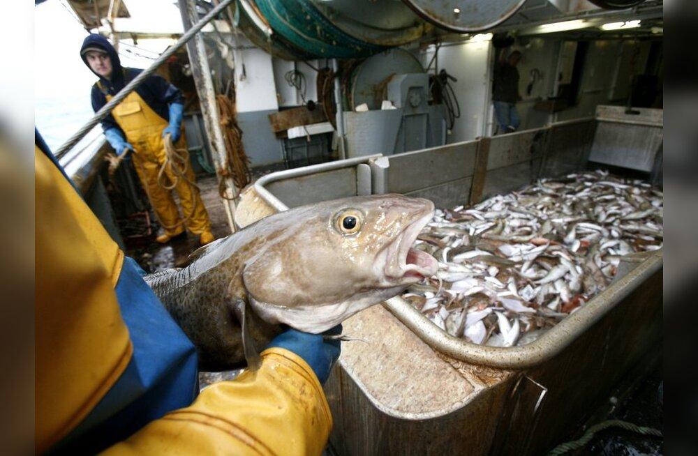 Hiiumaa suurima kalatööstuse varemetel valitseb vaikus