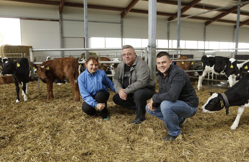 Avo Kruusla: alguses oli üks lehm, kaks mullikat ja loll unistus