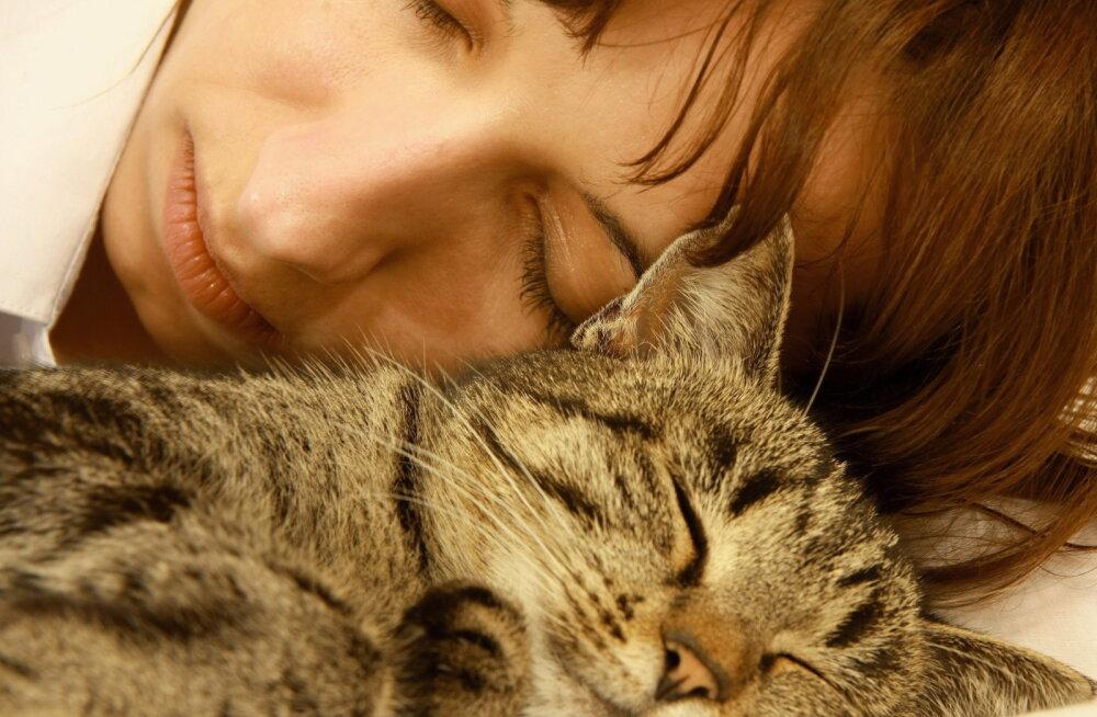 Miks kass minu kõrval magada armastab?