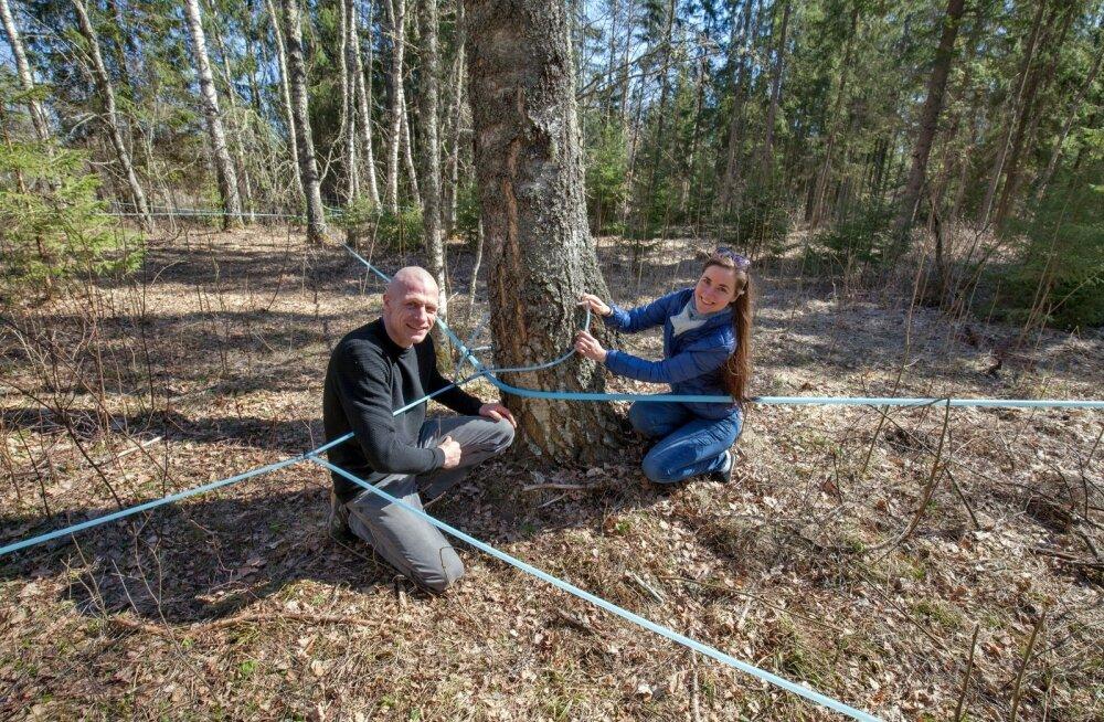 """""""Kogume mahla kaks aastat ühest kohast, siis laseme puudel ühe aasta puhata,"""" selgitavad Rain Komlev ja Birgit Lõhmus."""