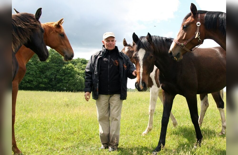 Eesti sporthobune on kõige uuem siinmail aretatud hobusetõug