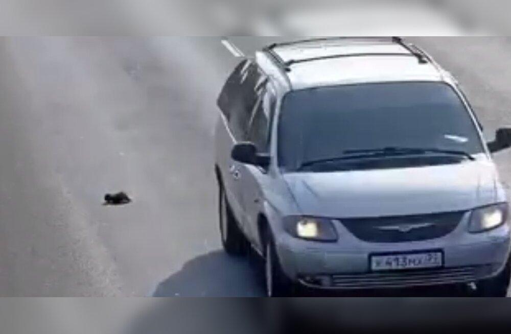 Õnnelik õnnetus: Heasüdamlik mees päästab napilt surmasuust väeti kassipoja
