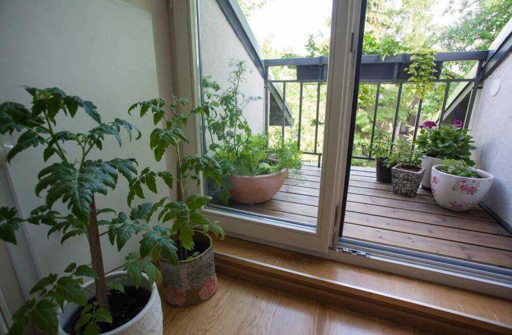 Värvikireva elukeskkonna loomiseks istutage kokku köögiviljad, maitsetaimed ja lilled.