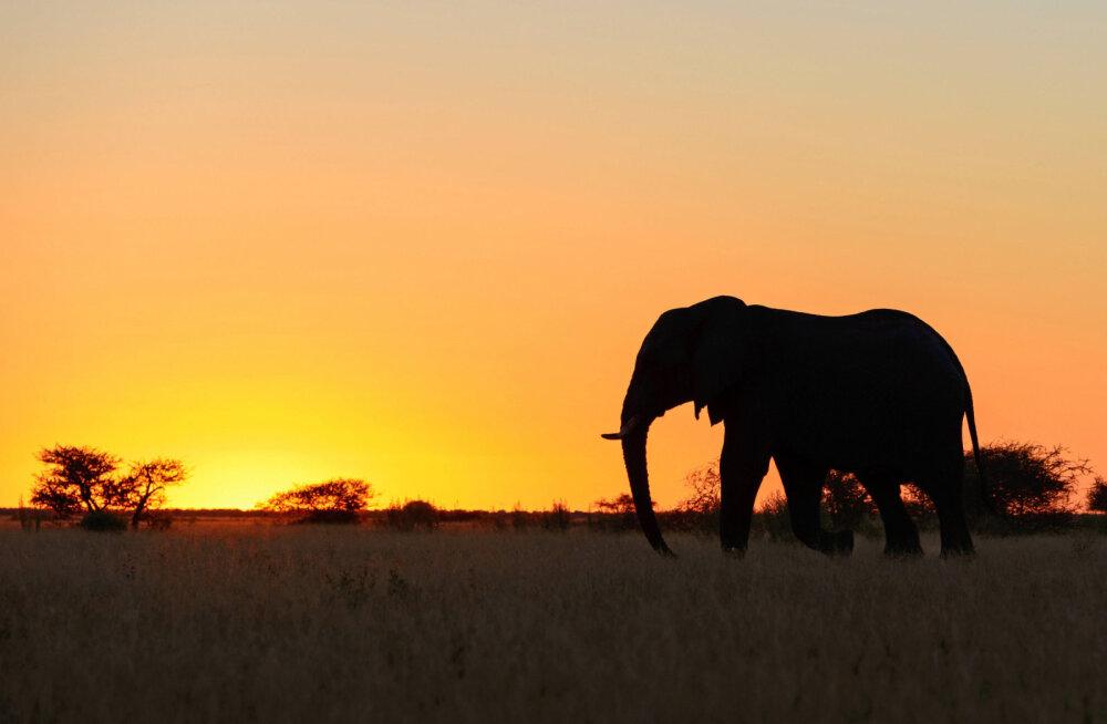 Тест: Легко ли выжить в Африке?
