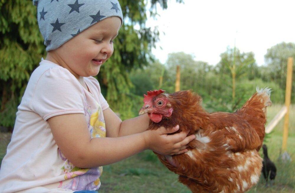 Õnnetust puurilinnust õnnelikuks munejaks. Nipid, mis aitavad kanadel koduses lindlas kohaneda