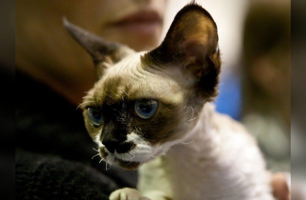 Kurjategija nõuab röövitud kassi eest üle miljoni euro lunaraha!