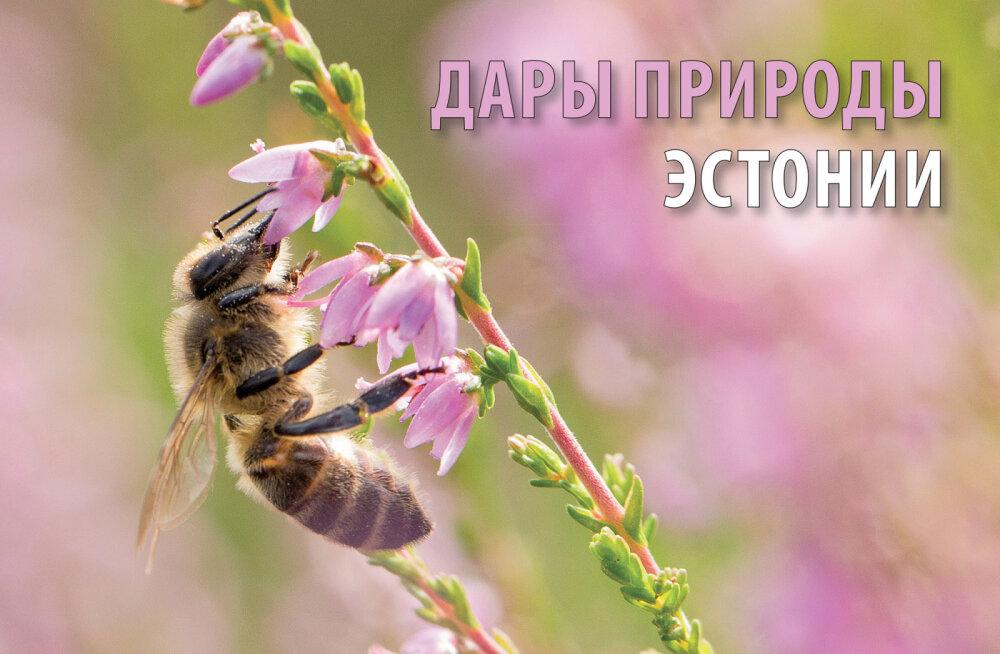 """Альманах """"Горизонты Эстонии 2020"""" знакомит с дарами природы и биоразнообразием страны на русском языке. Школам — бесплатно!"""