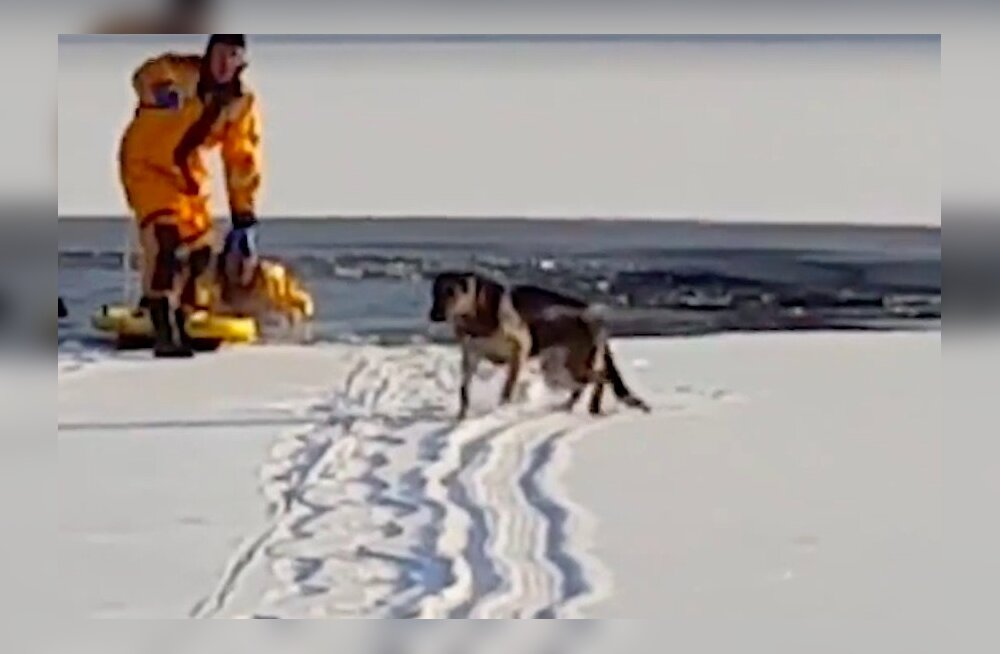 VIDEO | Päästjad tõttavad appi läbi jää vajunud koerale
