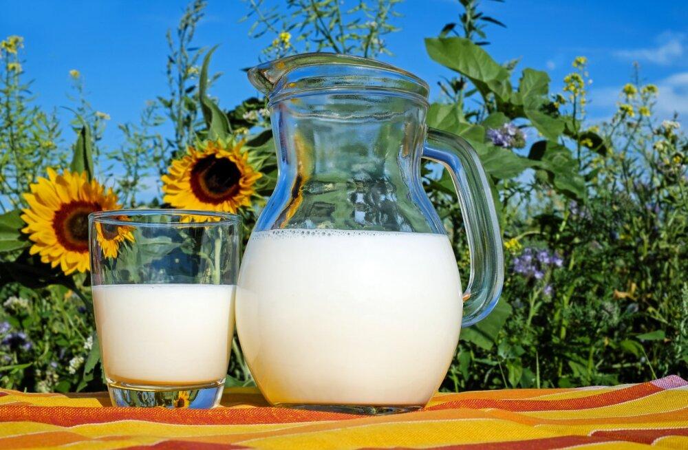 Piim – kasulik või hoopis kahjulik?