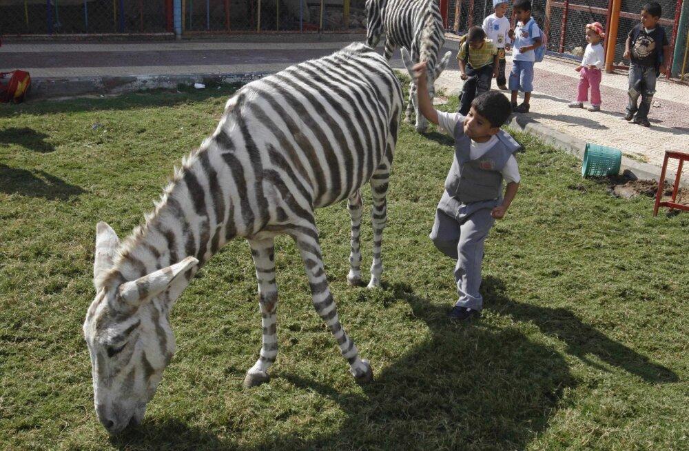 Loomade koonduslaagrid: 6 maailma kõige jahmatavamat loomaaeda
