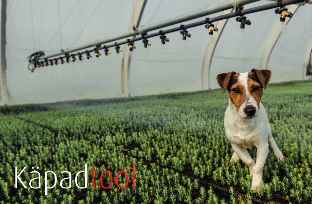 Käpad tööl: Domi - 100% taimlakoer