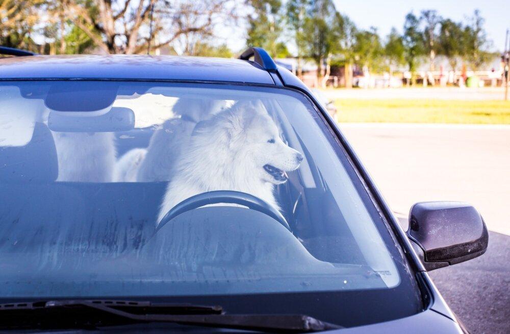 Koer roolis