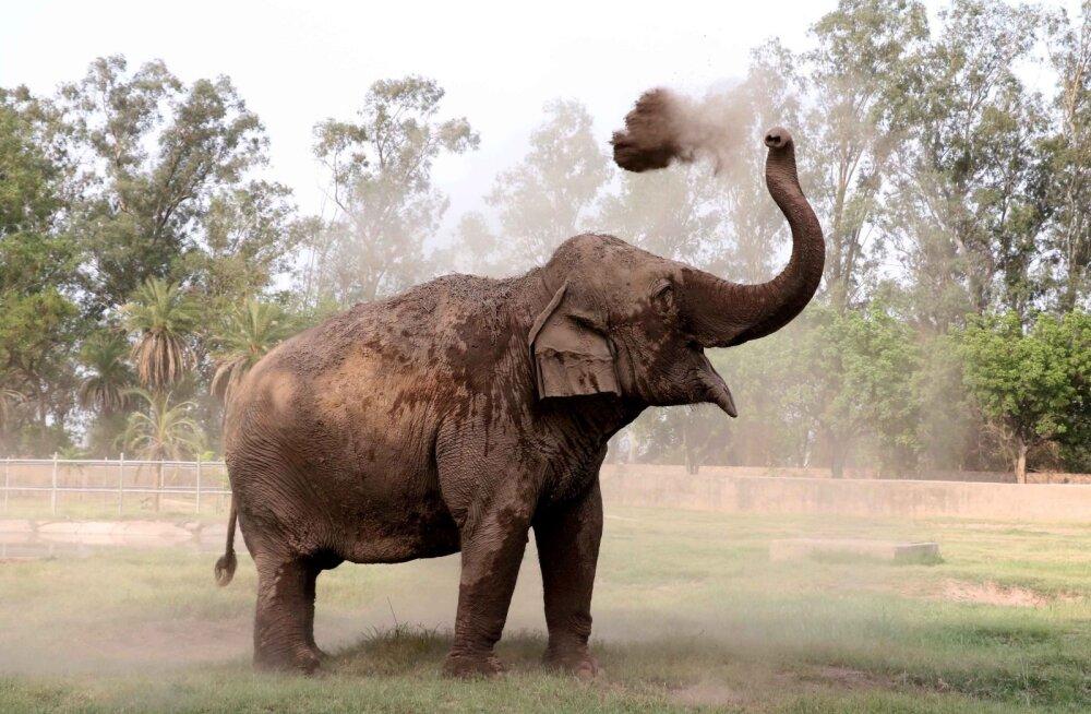 """Inimkond on hävitanud nii palju imetajaid, et """"asendusloomade"""" arenemine võtaks viis miljonit aastat"""