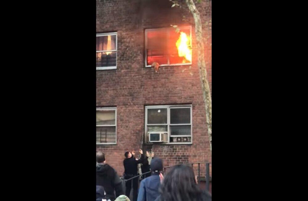 VIDEO   Kassi napp pääsemine põlema süttinud majast