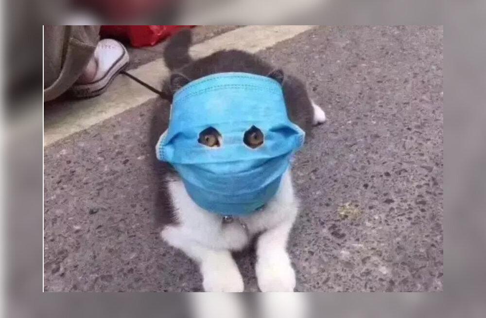 Koroonaviiruse paanika paneb kassid maski kandma