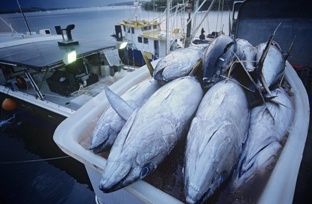 Neli põhjust, miks ei tuleks süüa tuunikala