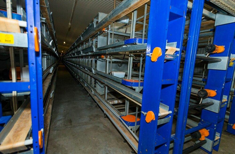 Eelmisel nädalal avanes OÜ Sanlind farmis kurb vaatepilt – 200 000 kana asemel vaatasid vastu tühjad restid.