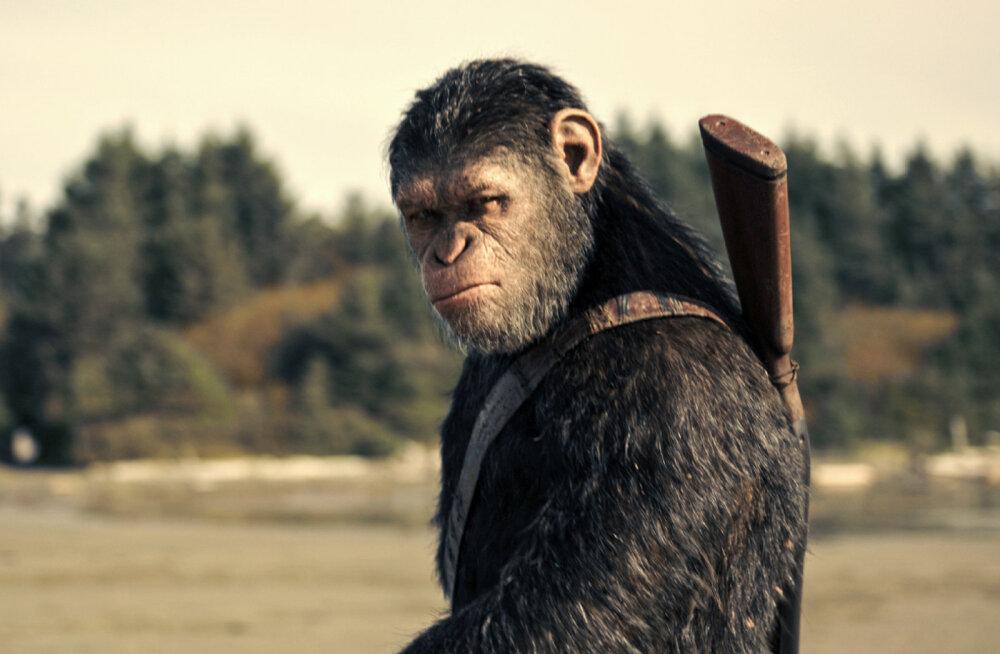 """Mati Kaal filmist """"Ahvide planeedi sõda"""": tänastel ahvidel pole mingit võimalust domineerida inimeseloomade üle"""
