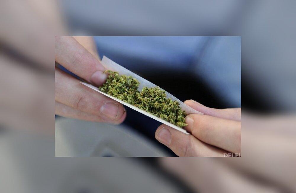 Valmimas on marihuaana pabeross. Foto: Juan Mabromata, AFP