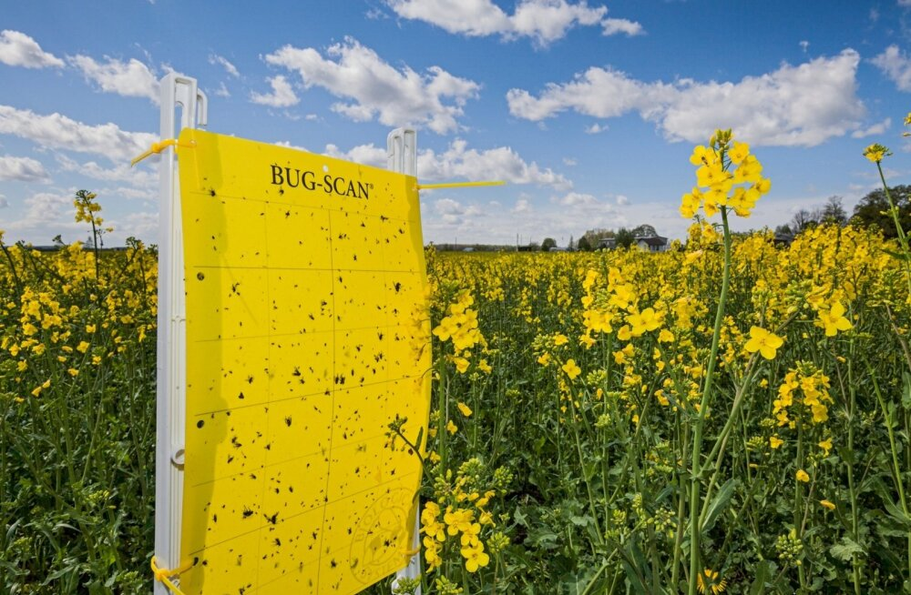 Keemiahiid Bayer rõhub taimekaitsele