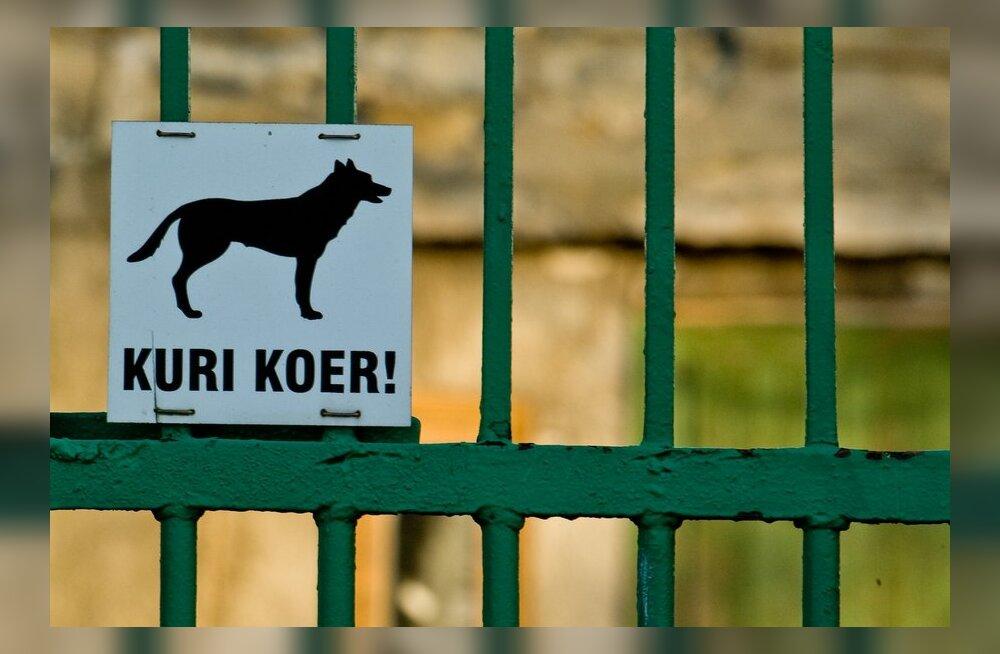 МуПо занимается более, чем 30 делами о нападении собак на человека