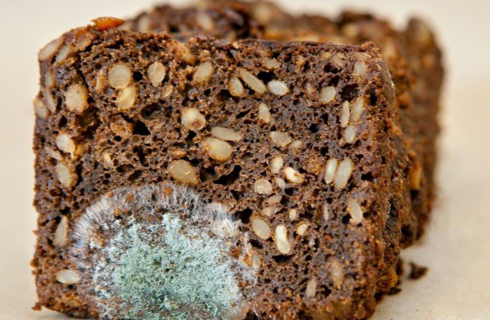 Hirmutav põhjus, miks ei tohiks hallitanud leivapätsi puhtaid viile mitte kunagi süüa või isegi nuusutada