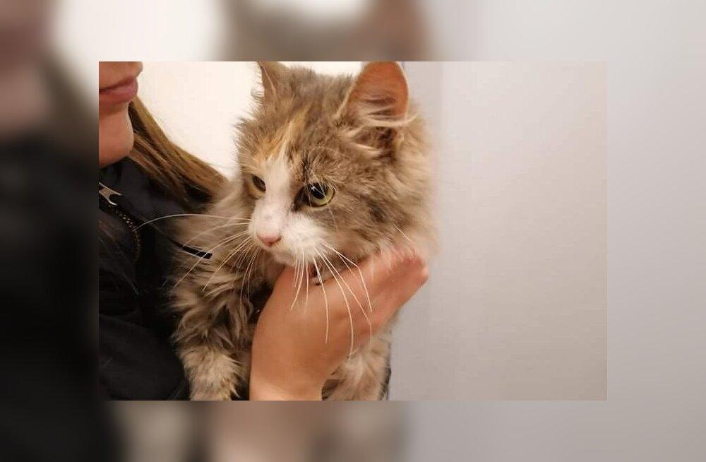 Kevadel sündinud kassipojad visatakse pärast kodustamist sügisel julmalt tänavale