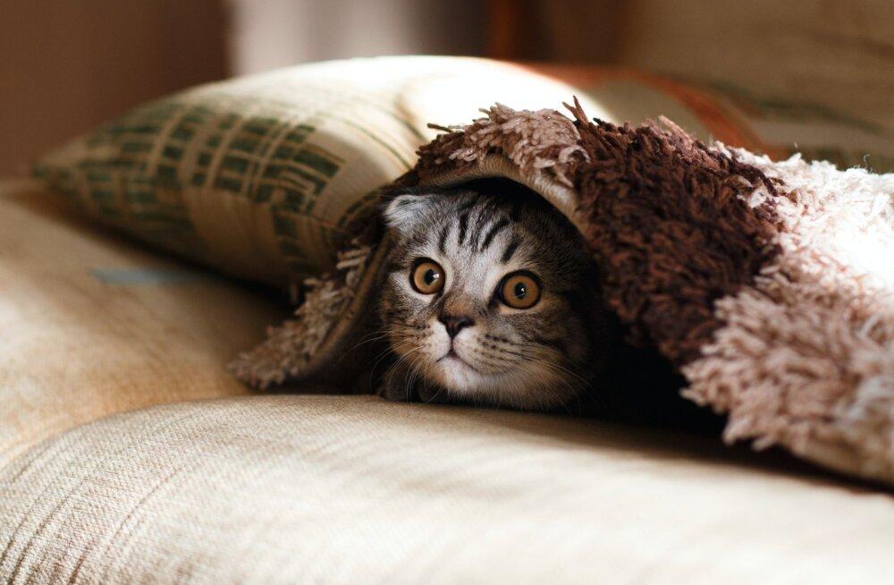 Kass on endast väljas? Kaheksa asja, mis põhjustavad kassis hirmu ja ärevust