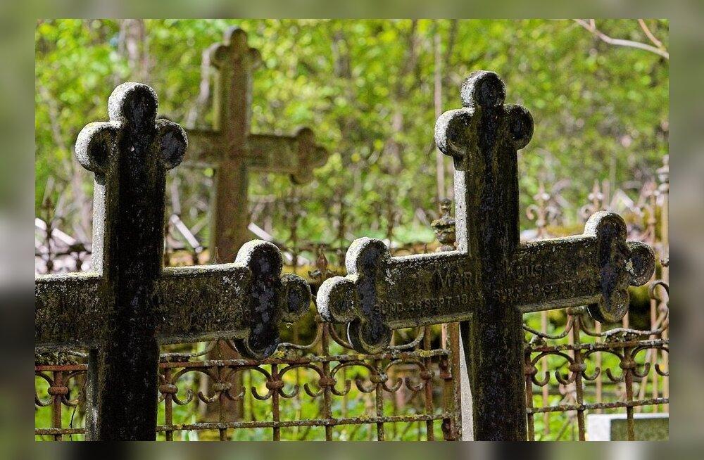 Kuhu kaovad kalmistult elupuud ja nende oksad?