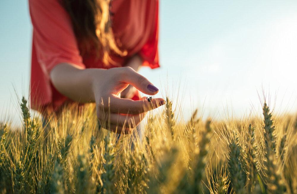 Juuli ja augusti sõnum: sinu vägi pärineb sinu jõudude tasakaalust