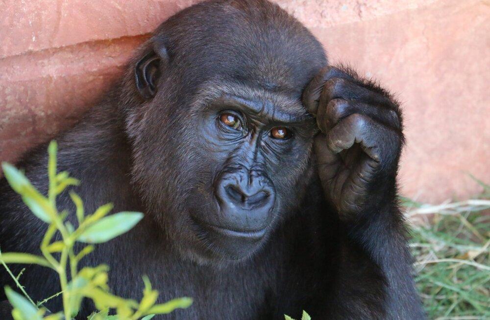 TEST | Kui hästi tunned loomariiki?