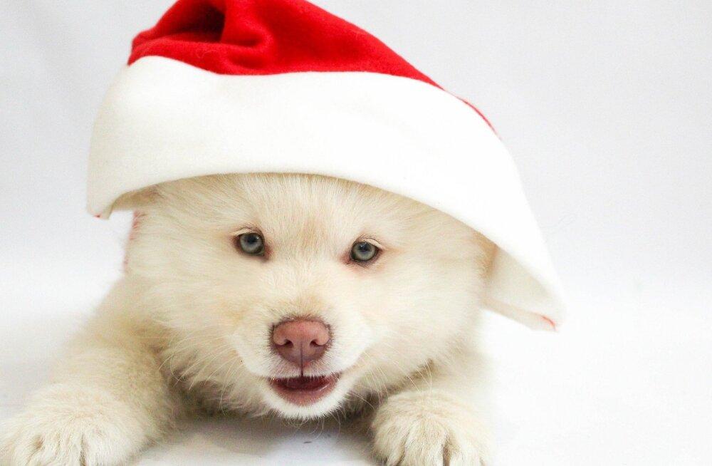 7 head nippi ja ideed, et ka jõulupühad mööduksid loomasõbralikult