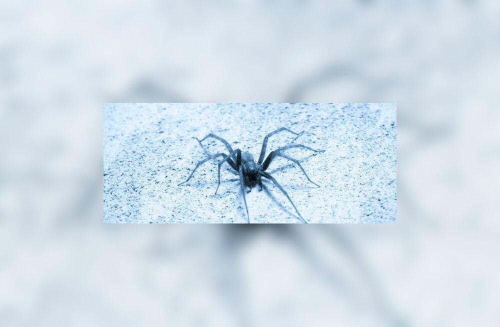 Naine kaotas ämblikuhammustuse tagajärjel rinna